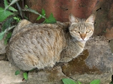 Cat in munnar
